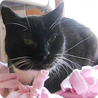 Adopt A Pet :: Mistletoe - Siren, WI