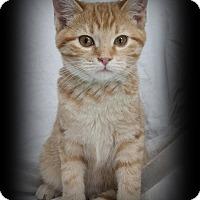 Adopt A Pet :: Padme - Mt. Prospect, IL