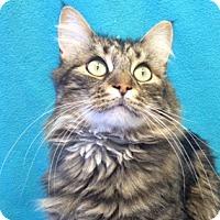 Adopt A Pet :: Diesel - Colorado Springs, CO