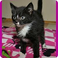Adopt A Pet :: Tahiti - Shippenville, PA