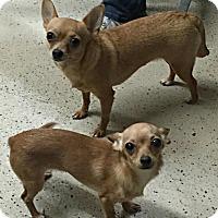 Adopt A Pet :: Margarita and Tater Tot - Washington, DC