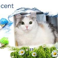 Adopt A Pet :: Millicent - Harrisburg, NC