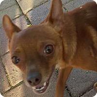 Adopt A Pet :: MIKE - Rancho Cucamonga, CA