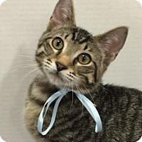 Adopt A Pet :: Tigg - Houston, TX
