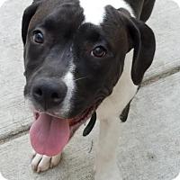 Adopt A Pet :: Outkast-Adopted! - Detroit, MI