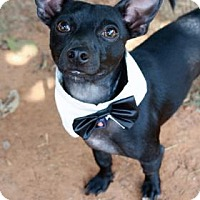 Adopt A Pet :: Riddler - Norman, OK