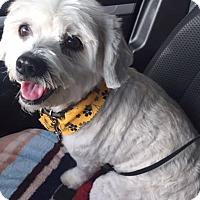 Adopt A Pet :: Jade - San Juan Capistrano, CA