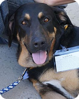 Labrador Retriever Mix Dog for adoption in San Diego, California - Laguna - Adopted!