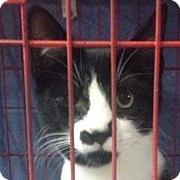 Adopt A Pet :: Curious Jeorge - Lexington, KY