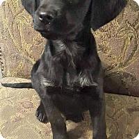 Adopt A Pet :: Rocky - Kimberton, PA