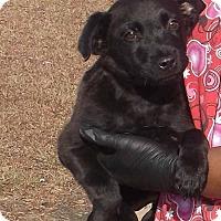 Adopt A Pet :: Colby - Orangeburg, SC
