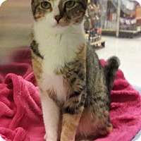 Adopt A Pet :: Noel - Fullerton, CA