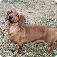 Adopt A Pet :: Mason - Decatur, GA