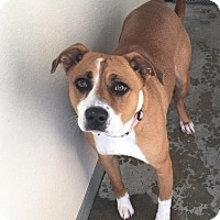 Adopt A Pet :: Macie - Visalia, CA