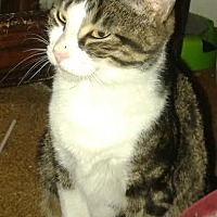 Adopt A Pet :: Whitney (adult female) - Harrisburg, PA