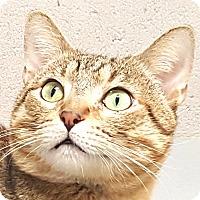 Adopt A Pet :: George - Friendswood, TX