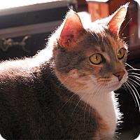 Adopt A Pet :: Dezzie - Winchendon, MA