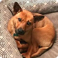 Adopt A Pet :: Dusty - Seattle, WA