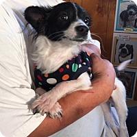 Adopt A Pet :: TOMMY - San Pablo, CA