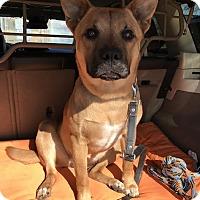 Adopt A Pet :: MONICA (COURTESY POST) - Phoenix, AZ