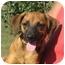 Photo 1 - Beagle Mix Dog for adoption in Allentown, Pennsylvania - Jack