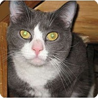 Adopt A Pet :: Nermal - Saranac Lake, NY