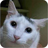 Adopt A Pet :: AJ Foyt - Lombard, IL