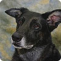 Adopt A Pet :: Debo - Inverness, FL