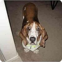 Adopt A Pet :: Dalton - Phoenix, AZ