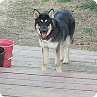 Adopt A Pet :: ELI - Sardis, TN