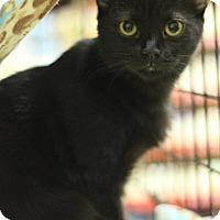 Adopt A Pet :: Michelle - Sacramento, CA