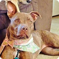 Adopt A Pet :: Tori - Reisterstown, MD