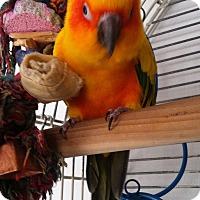 Adopt A Pet :: Tango - Shawnee Mission, KS