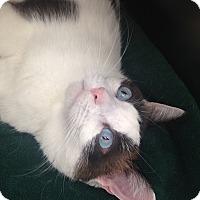 Adopt A Pet :: Camilla - Newport Beach, CA