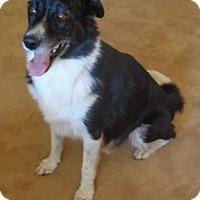 Adopt A Pet :: Oreo - Only $55 adoption! - Litchfield Park, AZ