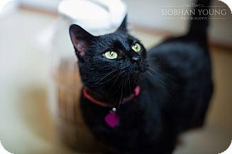 Cat Adoption Fredericksburg Va
