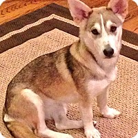 Adopt A Pet :: Olive - Harrisonburg, VA