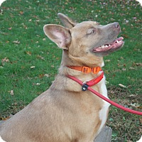 Adopt A Pet :: Kira - SOUTHINGTON, CT
