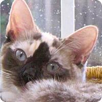 Adopt A Pet :: Charlotte aka Charlie - Davis, CA