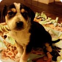 Adopt A Pet :: Winona - Manhattan, NY
