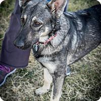 Adopt A Pet :: Noel - Phoenix, AZ