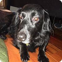 Adopt A Pet :: Winston - Doylestown, PA