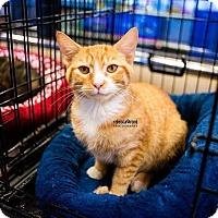 Adopt A Pet :: Mittens - Atlanta, GA