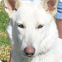 Adopt A Pet :: Mel - Phoenix, AZ