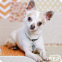 Adopt A Pet :: Butch Cassidy - Portland, OR