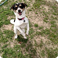 Adopt A Pet :: Bree - Simi Valley, CA