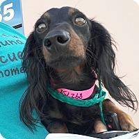 Adopt A Pet :: Zelda - Henderson, NV