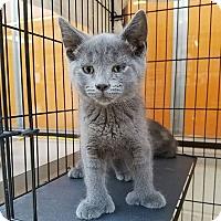 Adopt A Pet :: Ivy - Elyria, OH