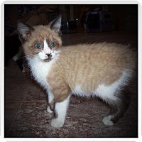 Adopt A Pet :: SIMON - Medford, WI