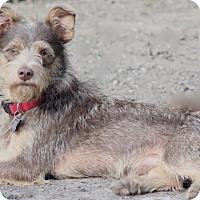 Adopt A Pet :: Mason - MEET ME - Woonsocket, RI